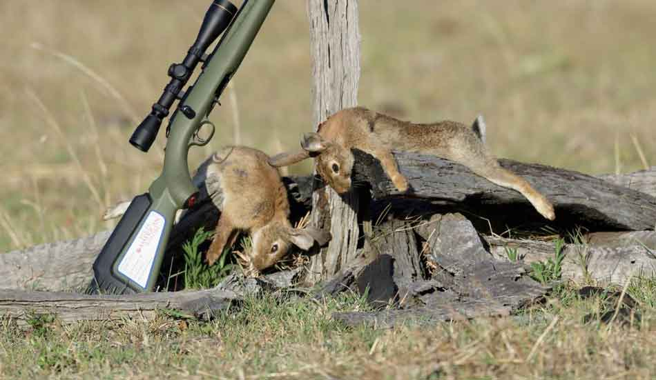 A 22lr rifle with a brace of rabbits