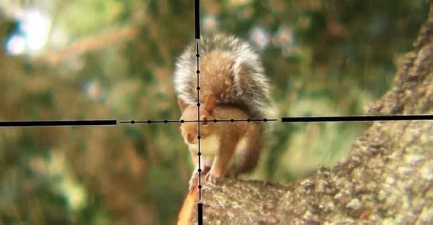 A 22lr rifle being aimed at a squirrel