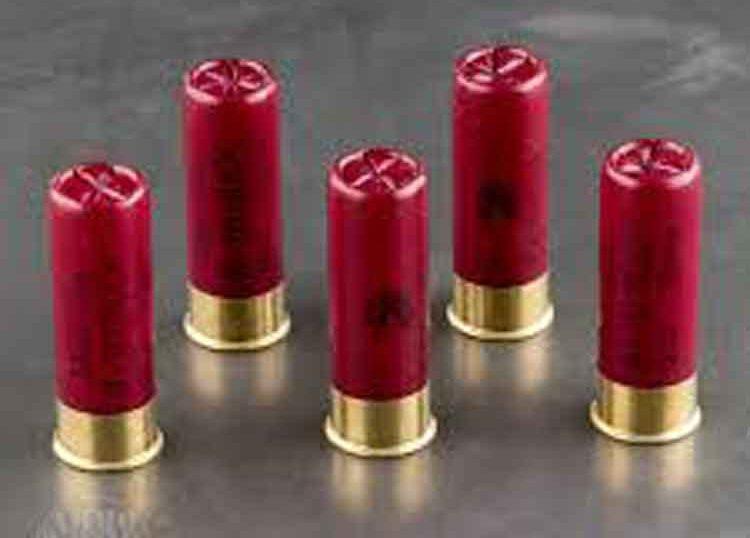 5 standing buckshot cartridges